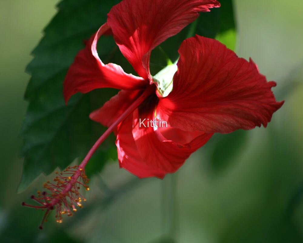 flower 09 by Kittin