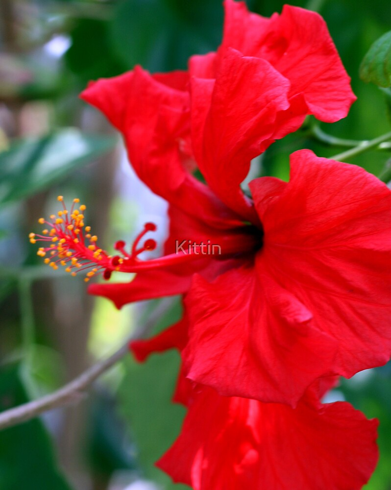 flower by Kittin