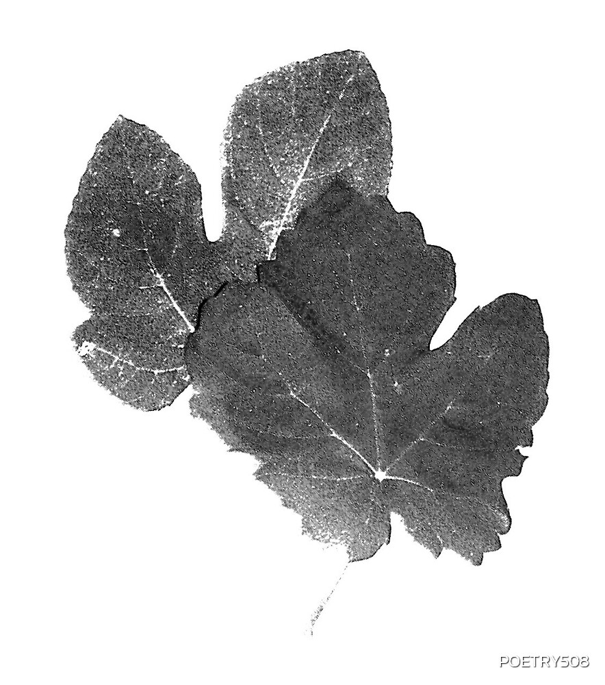 FIG LEAVES ; BLACK & WHITE by POETRY508