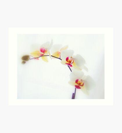 White Orchid No2 Art Print