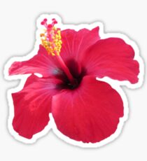 HibisCUS Feels Sticker