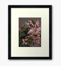 May Blossoms Framed Print