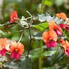 Wildflowers Western Australia by warriorprincess
