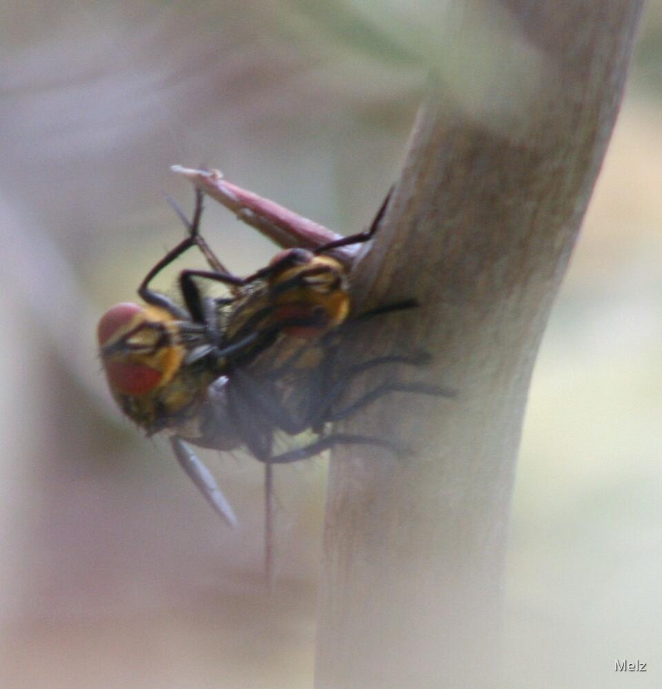 fornicating flys by Melz