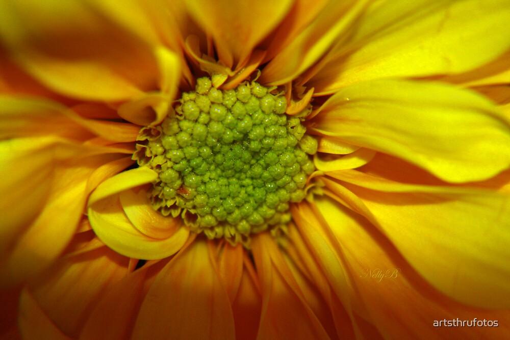 Golden Yellow by artsthrufotos