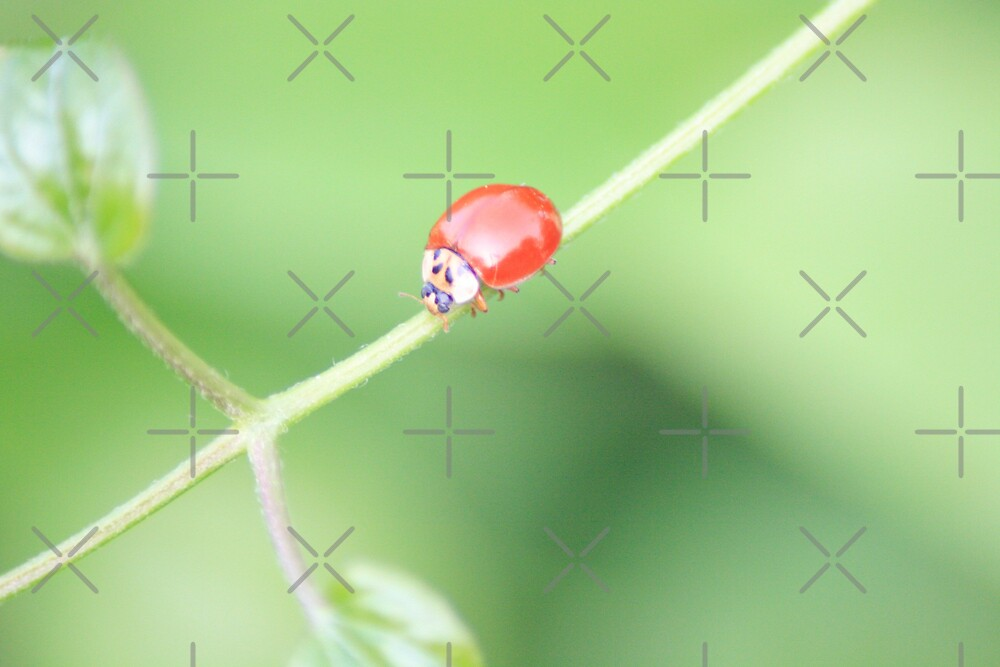 Roll Tide Lady Bug by connie campbell