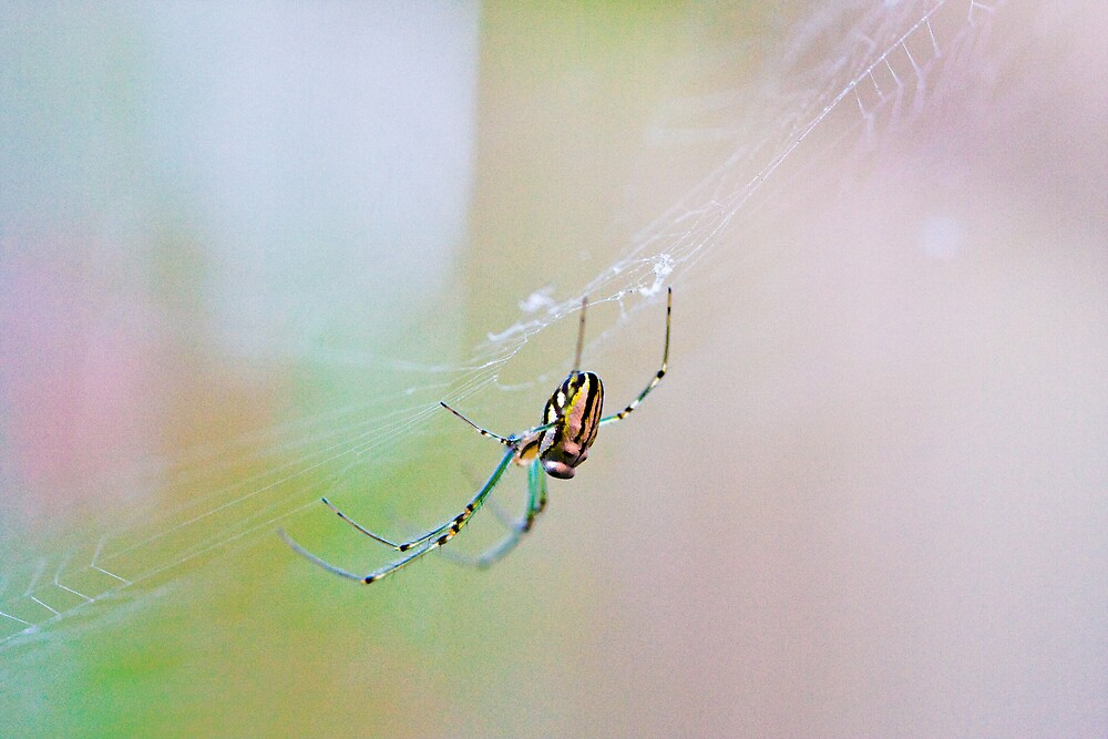 Colourful Spider by demistified