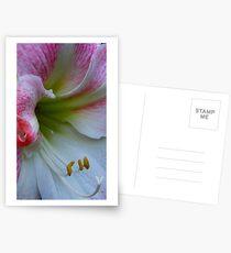 Amarillas Postcards