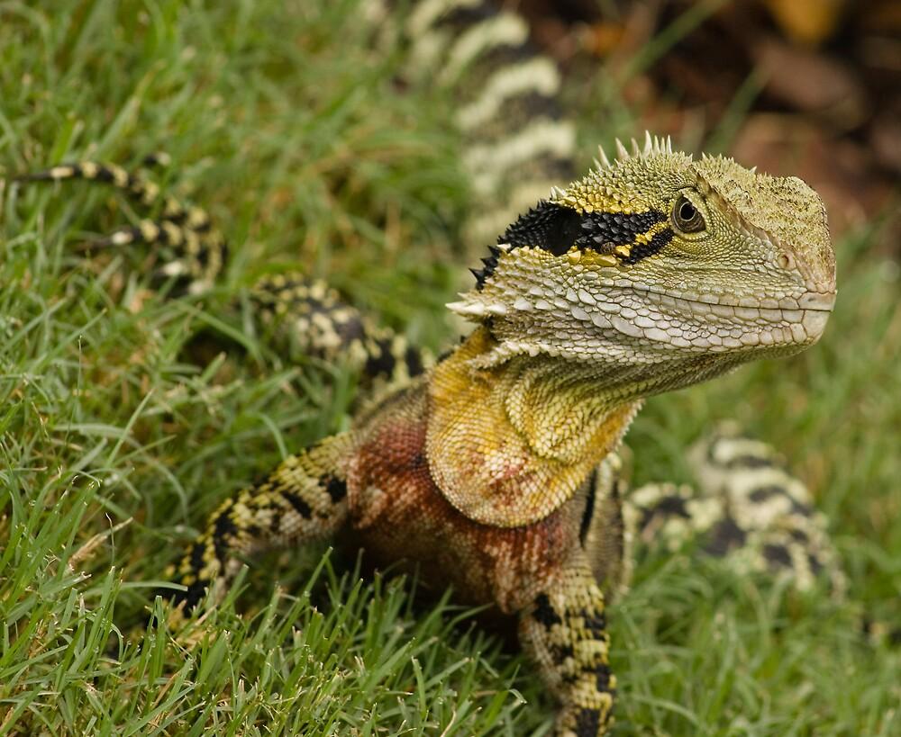 Top dragon by flyingZebra