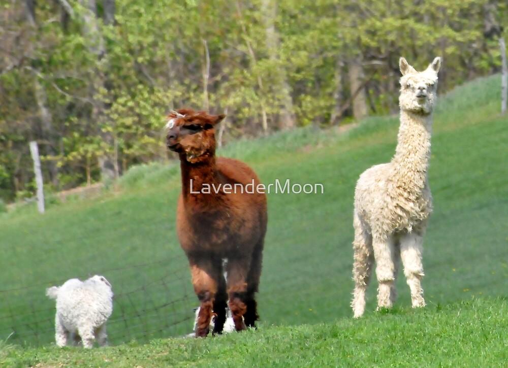 The Three Amigos by LavenderMoon