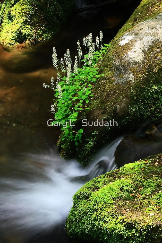 Foamflowers by Gary L   Suddath