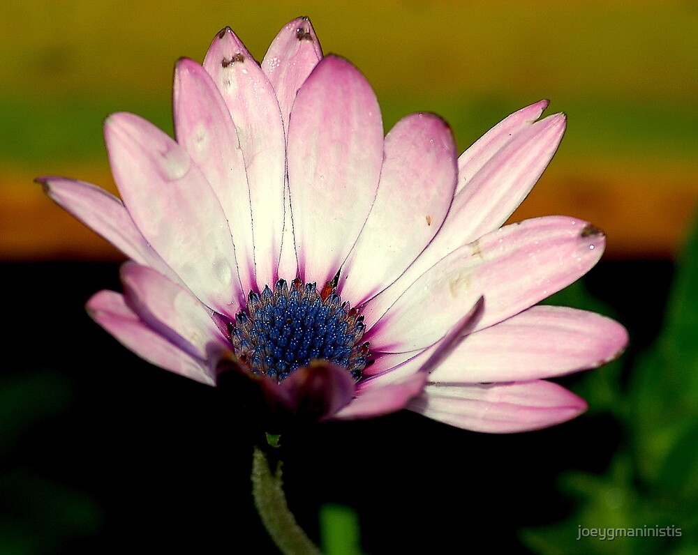 Flower 2 by joeygmaninistis