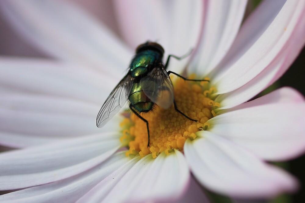 Green Fly by David Jamrozik
