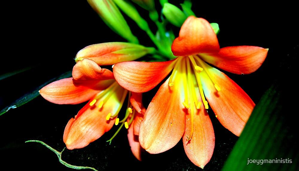 Flower 3 by joeygmaninistis