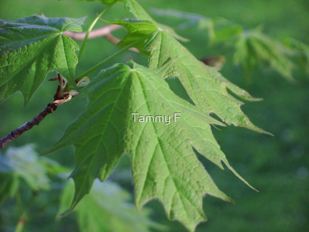Maple Leaf by Tammy F