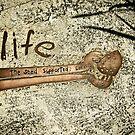 seeds of life.. by webgrrl