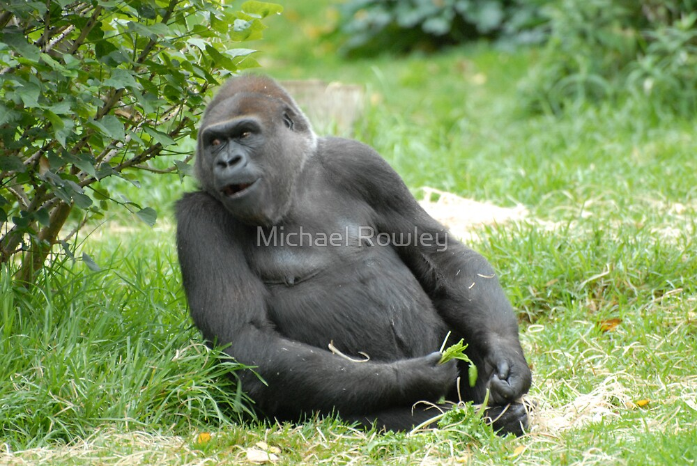 GORILLA by Michael Rowley