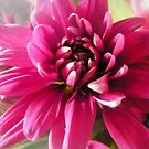 Beautiful Pink Chrysanthemum from Bouquet by EdsMum