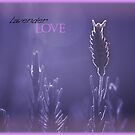 Lavender Love © Vicki Ferrari by Vicki Ferrari