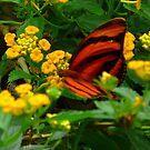 Butterfly by sunnykcdb