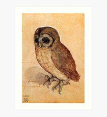 Little Owl by Albrecht Durer Art Print