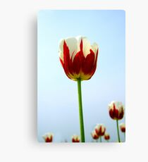 blooming marvellous Canvas Print