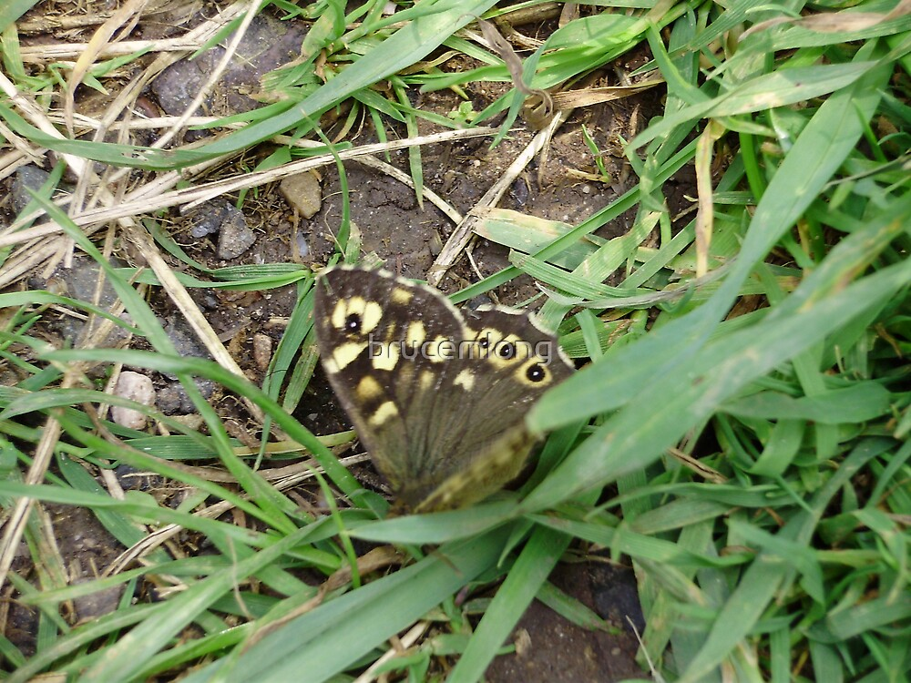 butterfly(Speckled wood) by brucemlong