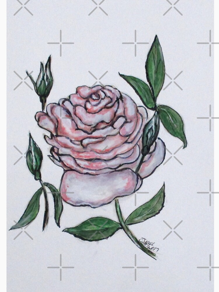 Pink And White Rose by cjkell