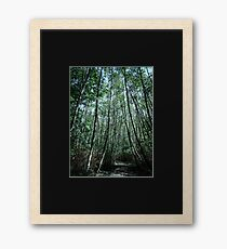 Pacific Spirit: Shinrin-Yoku II Framed Print