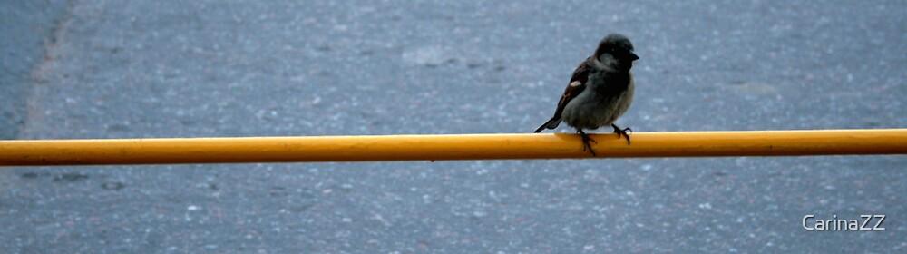 birdy by CarinaZZ