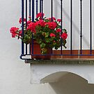 Balcony blooms. by Paul Pasco