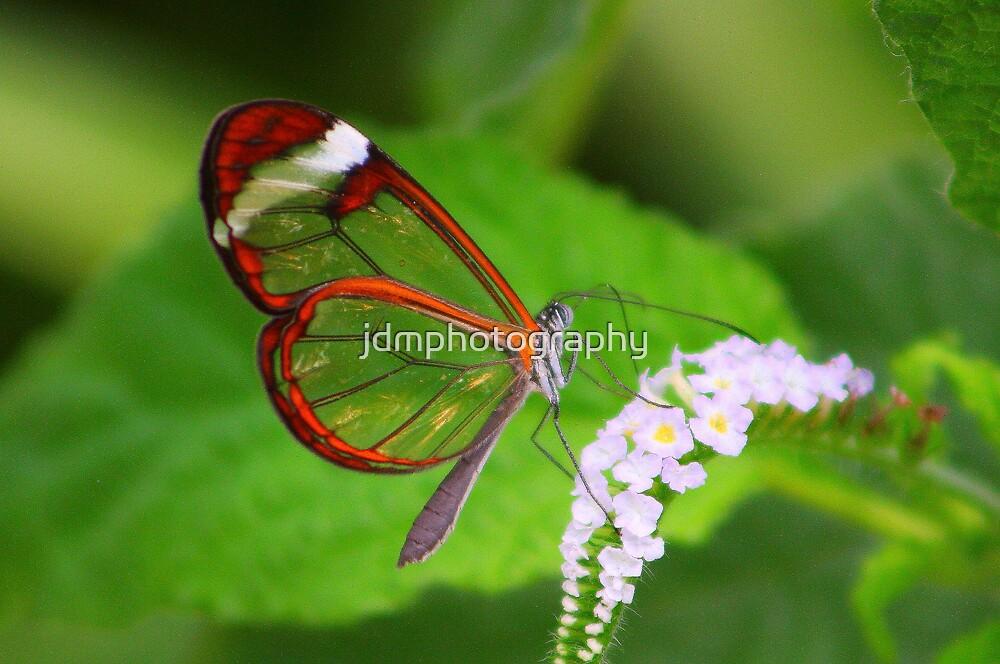 Transparent Butterfly  by jdmphotography