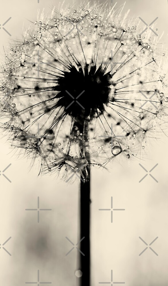 hope by Ingrid Beddoes