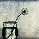 a year of dandelions II by Ingrid Beddoes