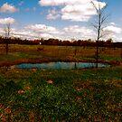 field & pond by Tim Martin
