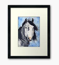 Dapple Grey Mustang Stallion Framed Print
