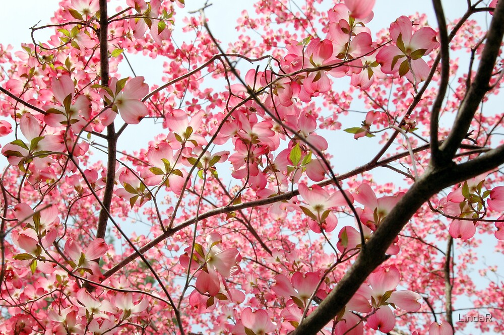 Branched in Pink... by LindaR