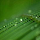 """SURVIVAL"" of a raindrop by Magriet Meintjes"