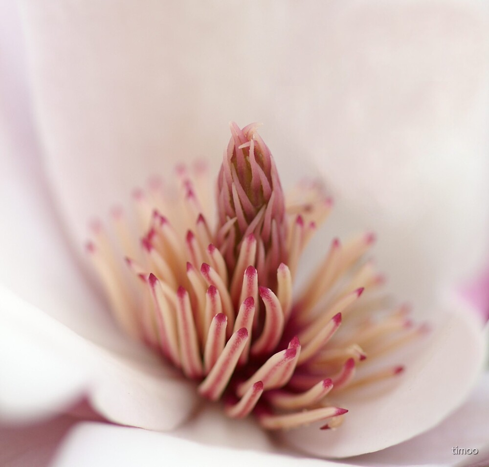 Pretty in Pink by timoo