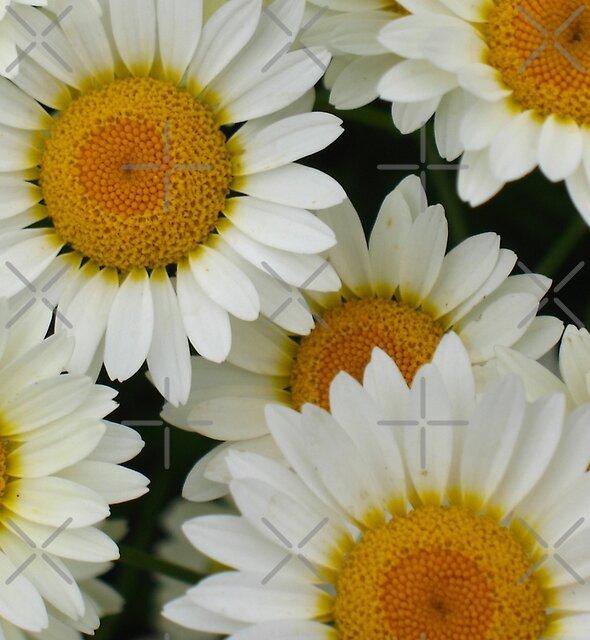 Happy Daisy  - JUSTART © by JUSTART