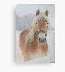 Winter Horse  - JUSTART © Canvas Print