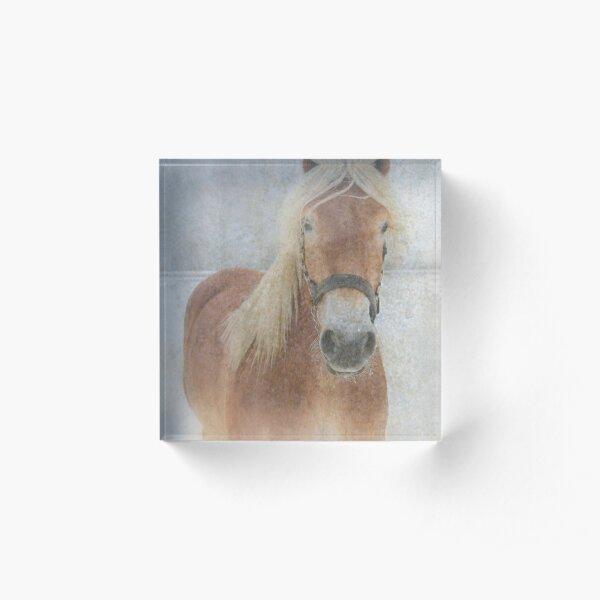 Winter Horse  - JUSTART © Acrylic Block