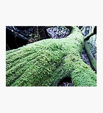 Long moss covered tree trunk on forest floor. Photographic Print