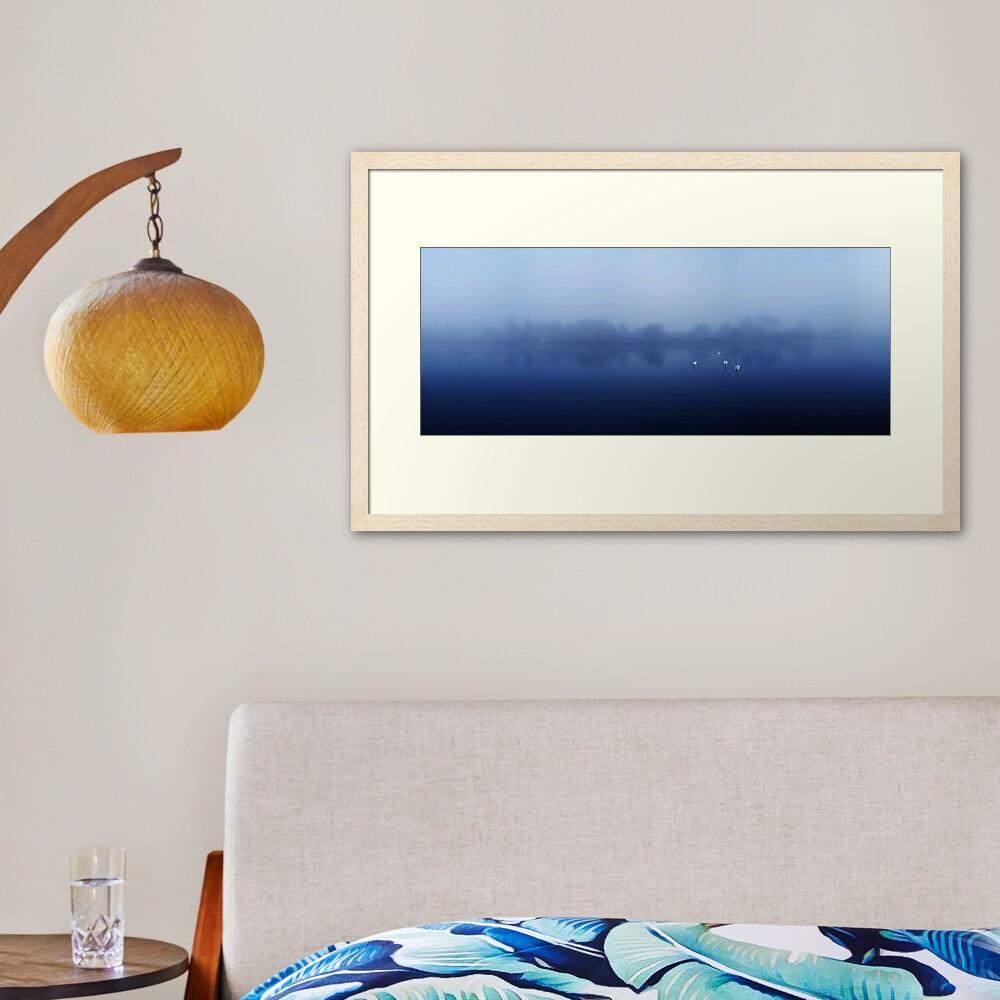 Swans Framed Art Print