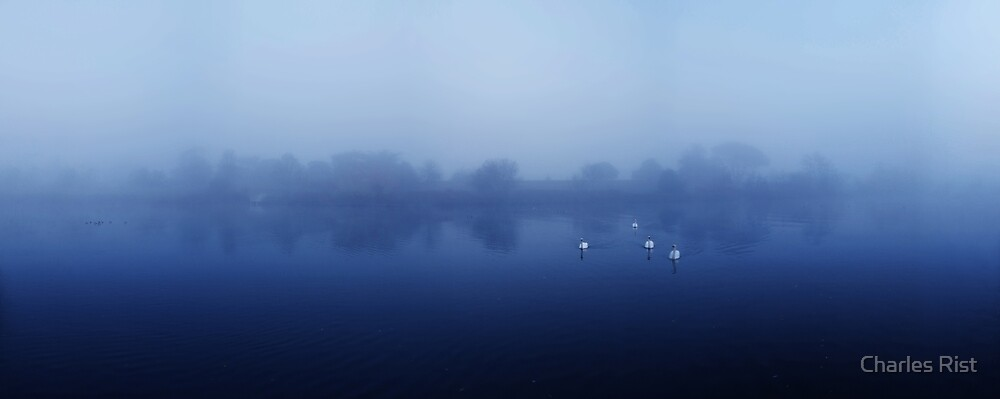 Swans by Charles Rist