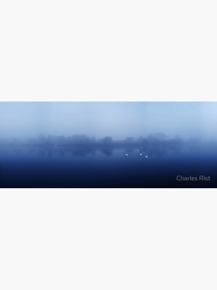Swans by Ordinata