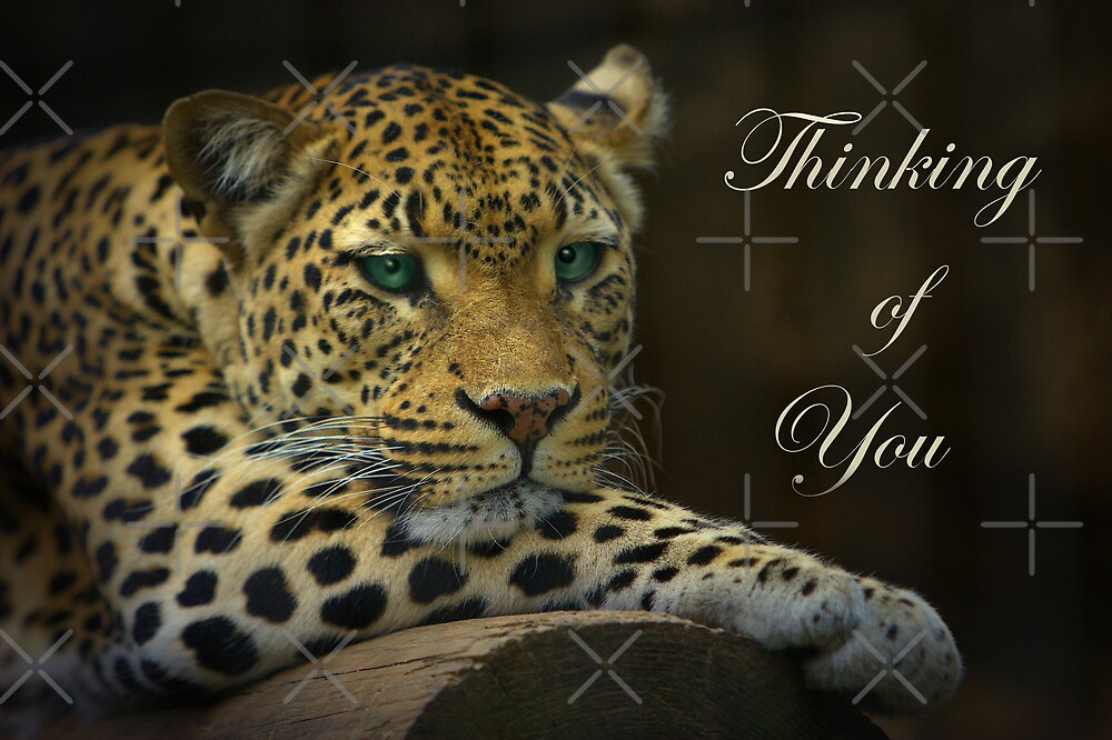 Sunday Afternoon - Thinking of You by Lisa G. Putman