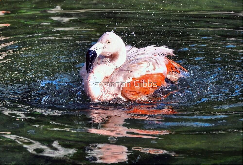 Chilean Flamingo by Savannah Gibbs