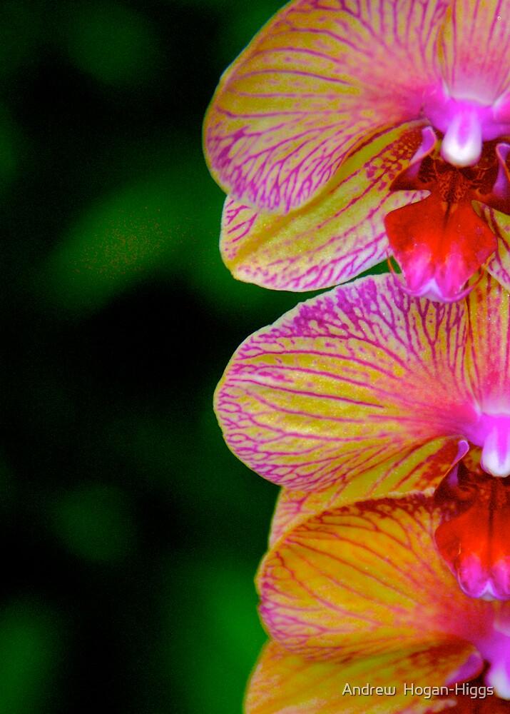 Sweet Cupid's Bloom by Andrew  Hogan-Higgs