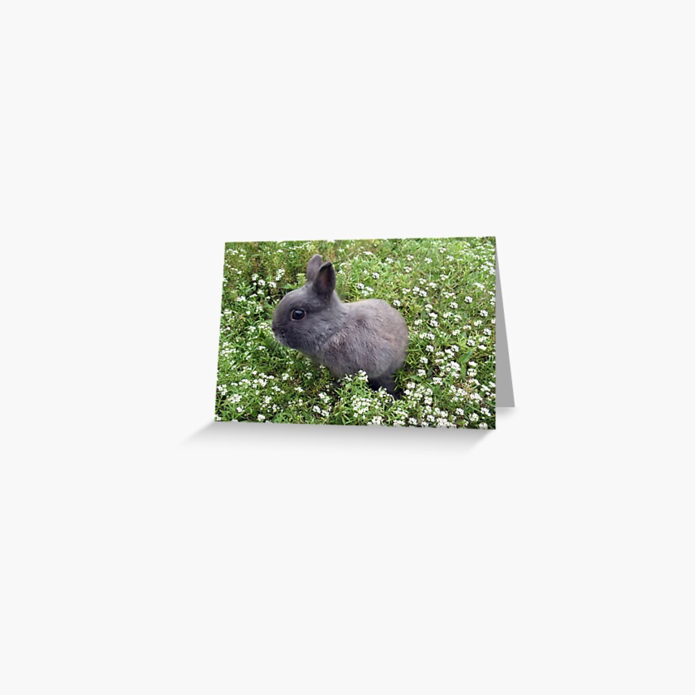 Blank Inside 11 Designs to choose from Alison/'s Animals Greetings Cards